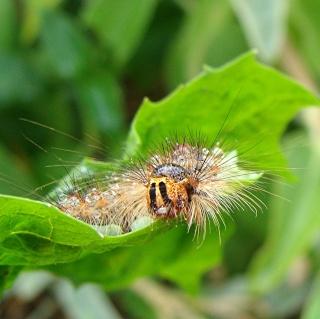 Les chenilles deviendront des papillons ... Dsc00317