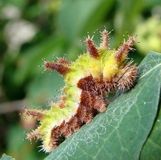 Les chenilles deviendront des papillons ... Dsc00321