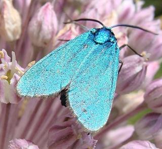 Papillons Dsc00517