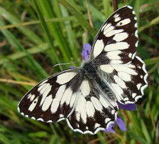 Papillons Dsc00813