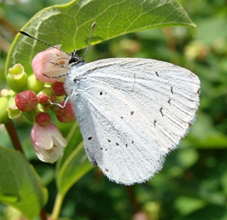 Papillons Dsc00815
