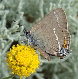 Papillons Dsc01012