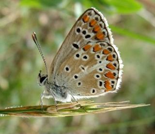 Papillons un peu plus insolites Dsc01310