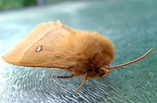 Papillons un peu plus insolites Dsc02510