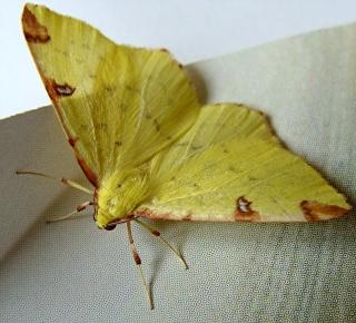 Papillons un peu plus insolites Dsc02910
