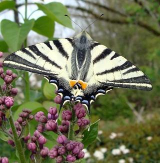 Papillons un peu plus insolites Dsc03112