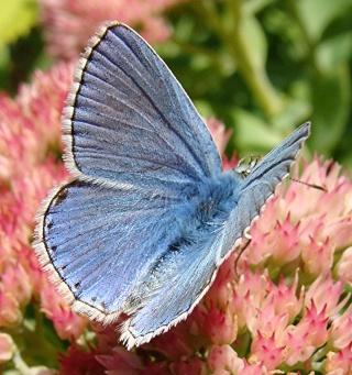 Papillons un peu plus insolites Dsc03711