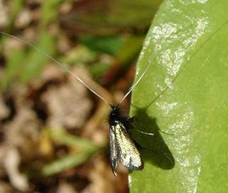 Papillons Dsc06511