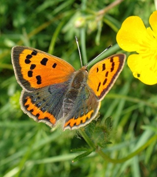 Papillons Dsc06810
