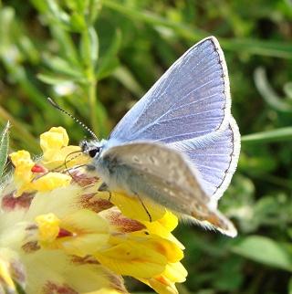 Papillons Dsc06911