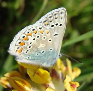 Papillons Dsc06912
