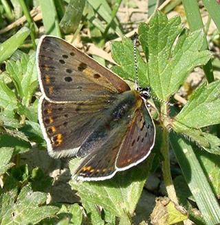 Papillons un peu plus insolites Dsc07311