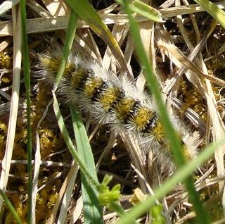 Les chenilles deviendront des papillons ... Dsc07314