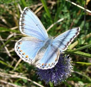 Papillons un peu plus insolites Dsc07410