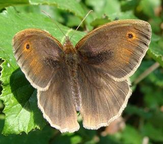 Papillons Dsc09213