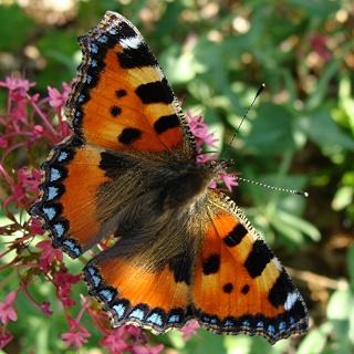 Papillons un peu plus insolites Dsc09810