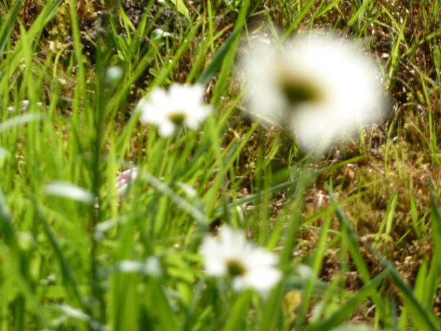 Les fleurs... A_trie13