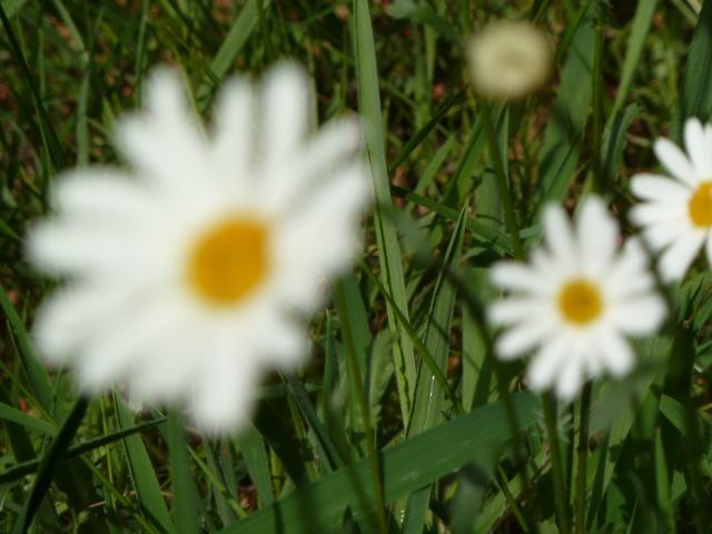 Les fleurs... A_trie14