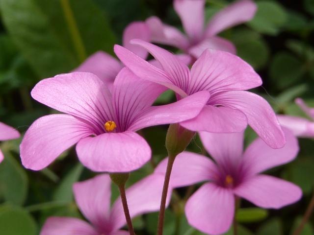 Les fleurs... A_trie28