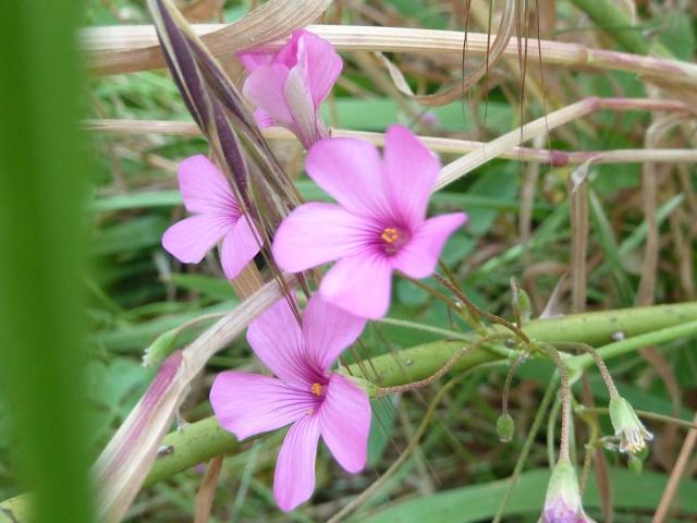 Les fleurs... A_trie29