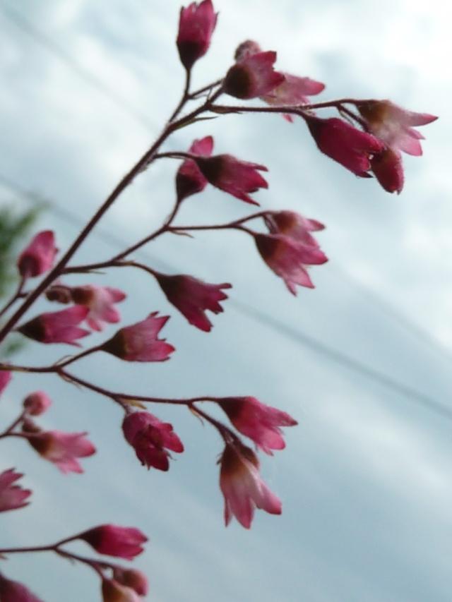 Les fleurs... A_trie31