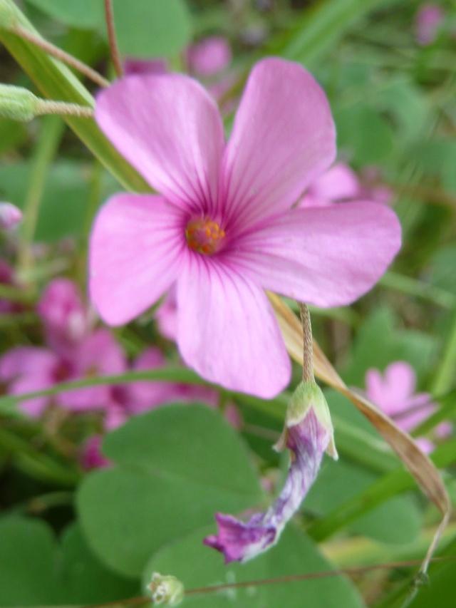 Les fleurs... A_trie32
