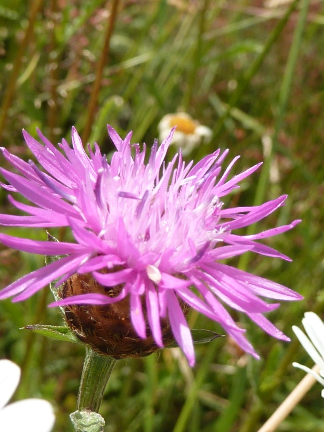 Les fleurs... Fleurs15
