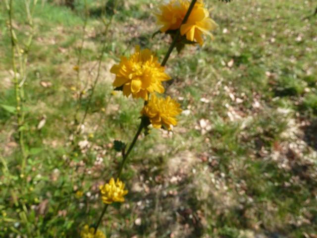 Les fleurs... Photos12
