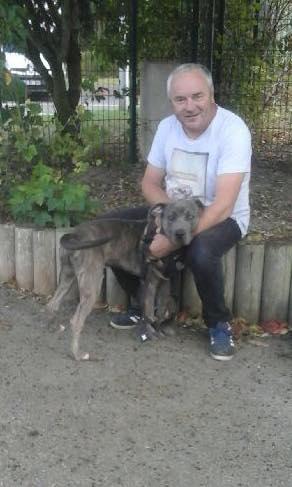 Murphy, mâle croisé cane corso/labrador 44590210