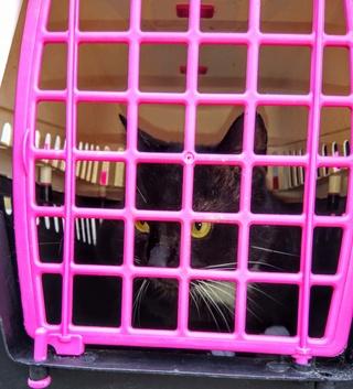 Chaussette, chat noir et blanc Img_2712