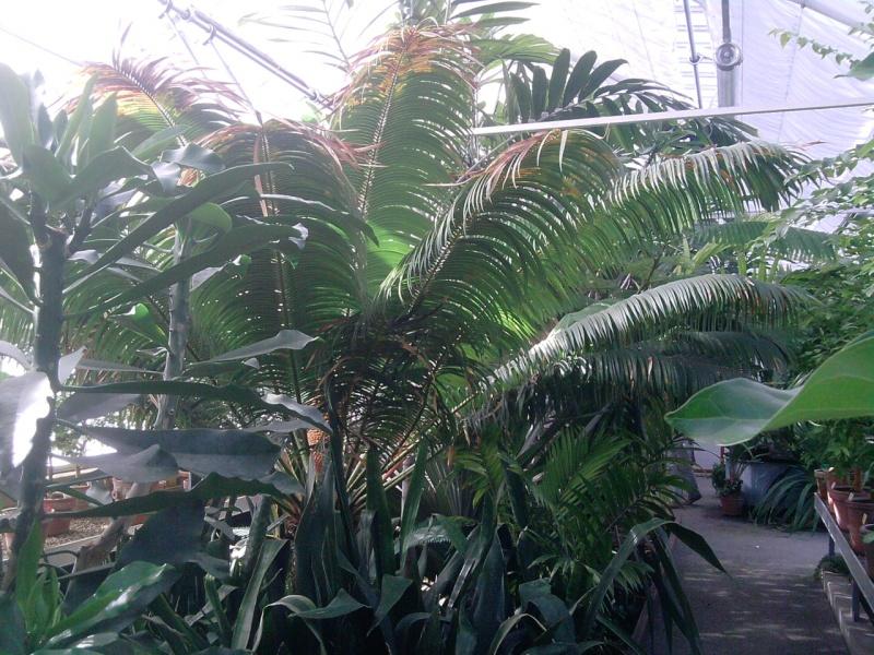 Folie des plantes à Nantes Jardin10