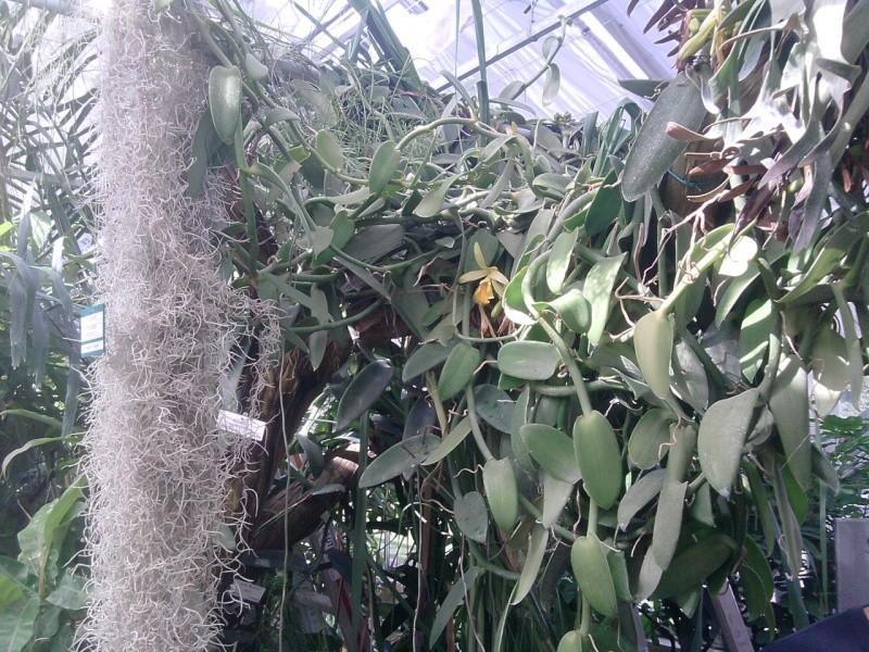 Folie des plantes à Nantes Jardin13