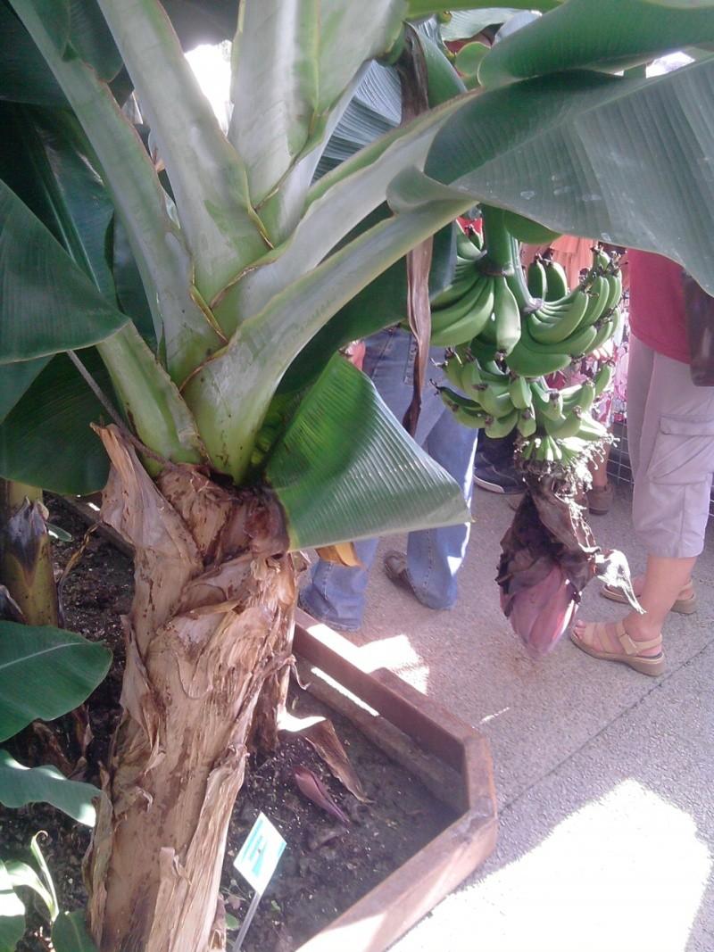 Folie des plantes à Nantes Jardin14