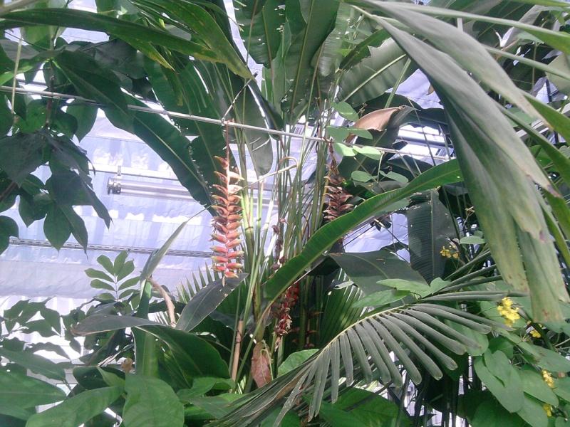Folie des plantes à Nantes Jardin16