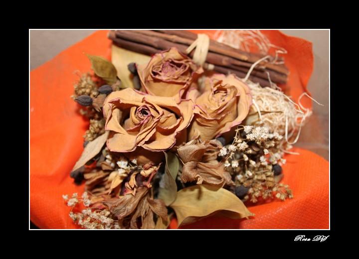 concours photo du mois d'octobre 2010. Thème : Fleurs ou feuilles séchées Img_2610
