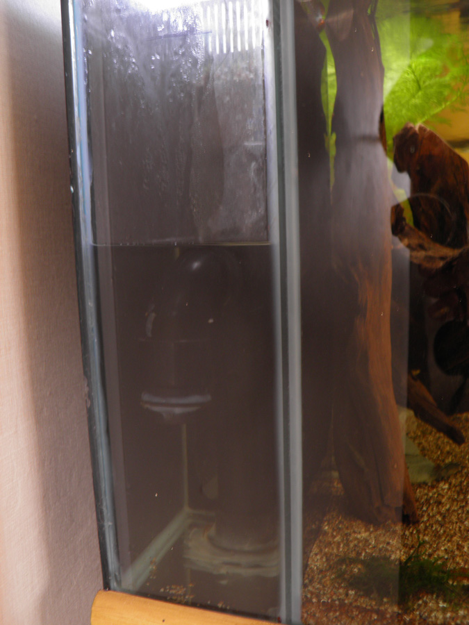 Large fish tank plus sump with RO and loads of stuff fishtank aquarium P6220012