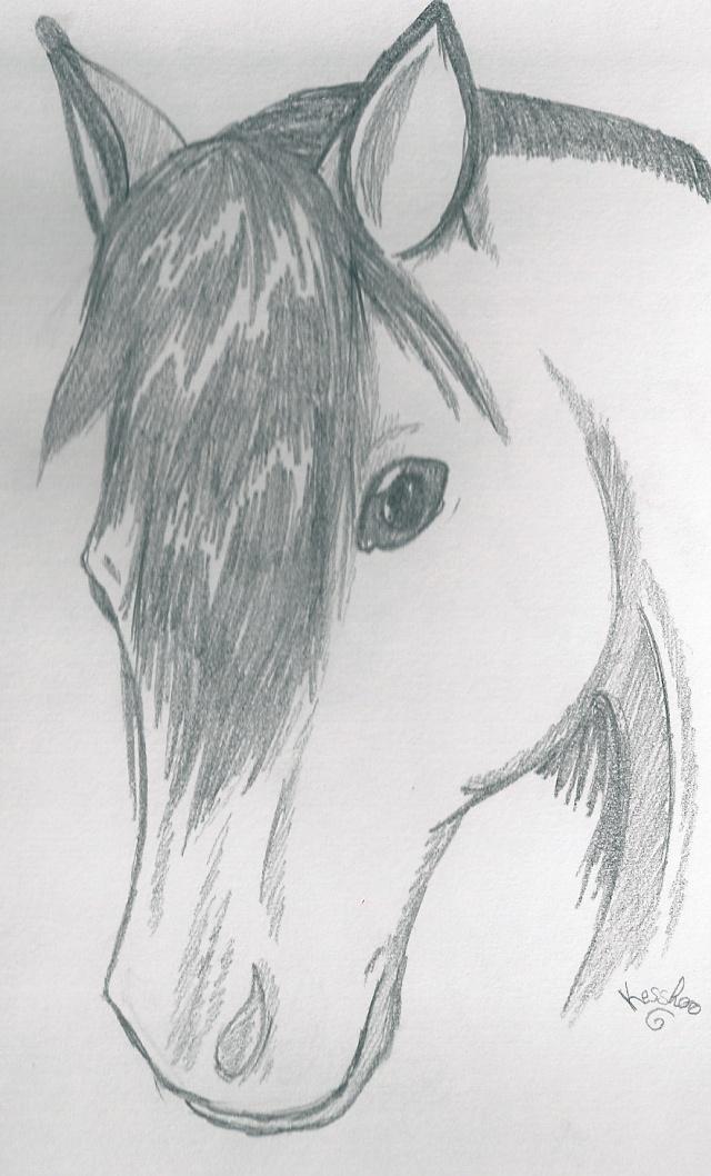 du noir au blanc Hpqsca15