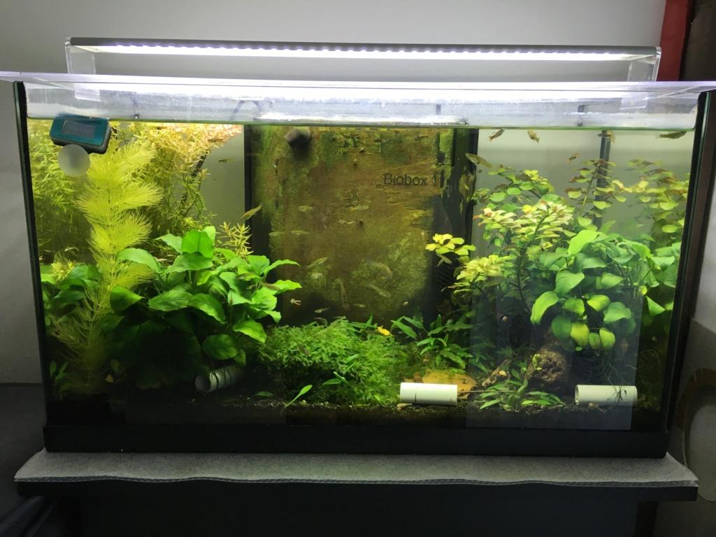 Aquarium à Wingei et spécifique crevette taiteebee  Img_3412