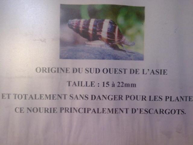 Spion.com : un panneau municipal de Bordeaux truffé de fautes.  Photo210