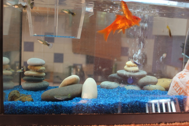 aquarium!!!! 00411