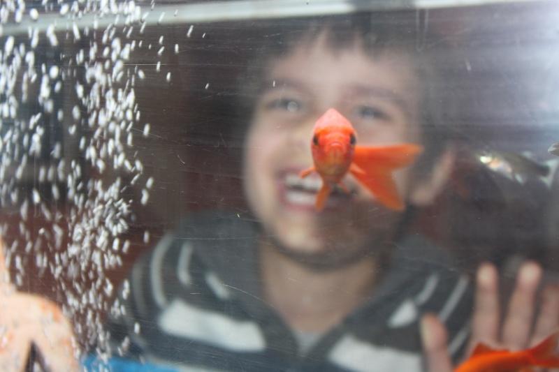 aquarium!!!! 02010