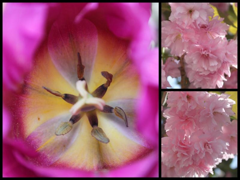 la photo Fleur11