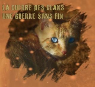 image du forum Chat-d10