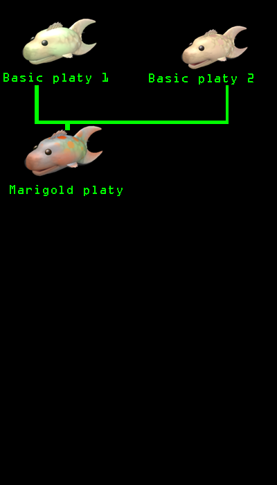To The Fish Platy_10