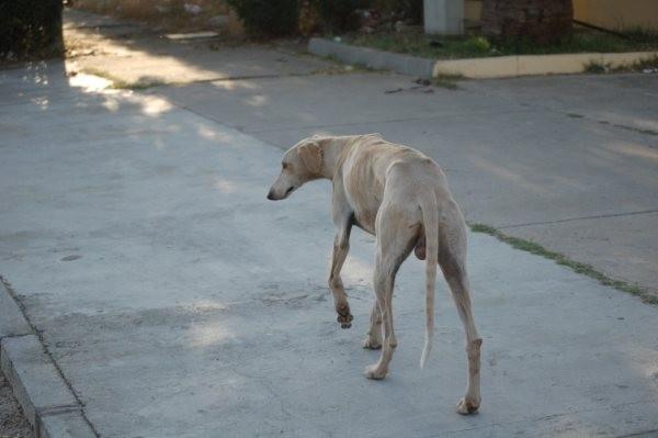 Memorias de un Perro Img_2210