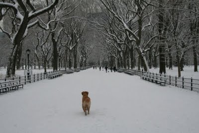 Memorias de un Perro Laniev10