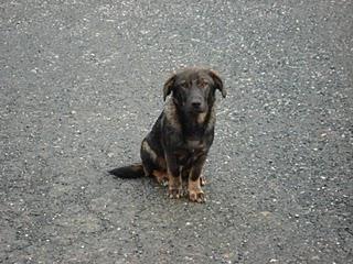 Memorias de un Perro Perroa10
