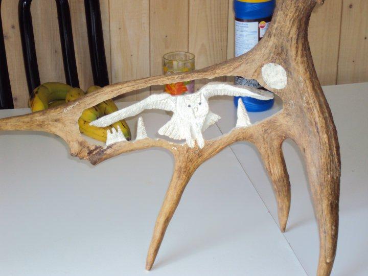 panache d'orignal sculpter (a voir ) 30713_29