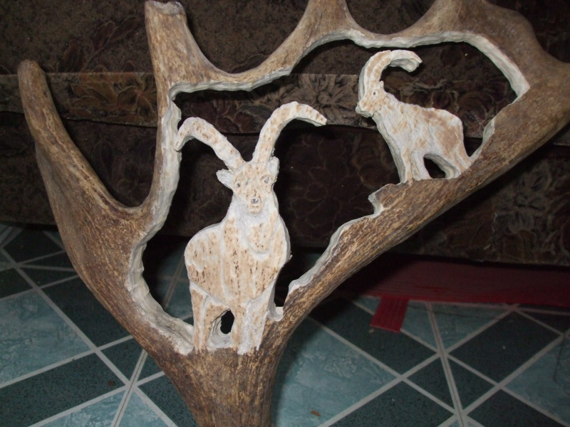 panache d'orignal sculpter (a voir ) Panach40
