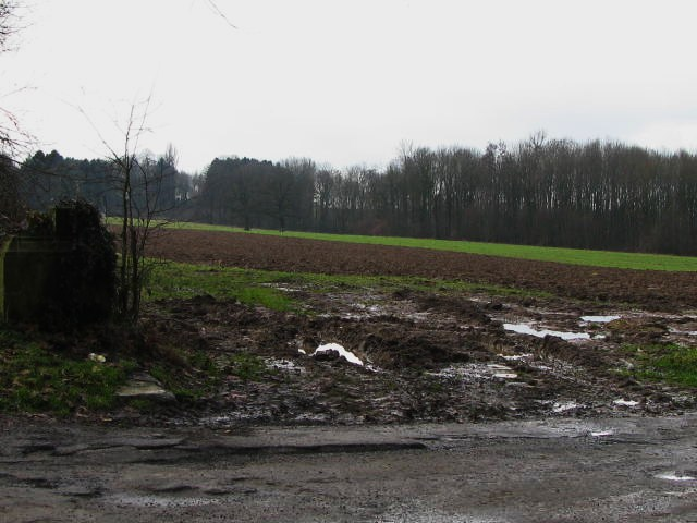 Carabes : destruction massive et durable Bois_d11